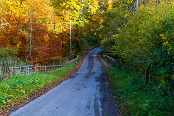 minor road goes through an autumn forest