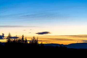 group of pine trees silhouetted under a blue and yellow sky after sunset