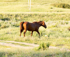 Wild horses in a nature reserve. The horses belonging to a local farm. The farm is closed. Horses are walking by themselves