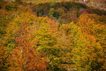 Forest in autumn, natural patterns and colorful background