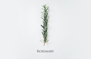 A sprig of fresh rosemary placed on a light white background with the inscription ROSEMARY. Food concept and seasoning dishes. Strengthening the taste with herbs, improving the taste.