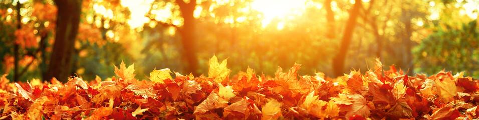 Goldener Herbst Fototapete