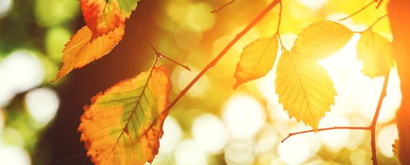 Fototapete - Goldener Herbst