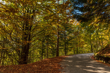 Scenic minor road through the forest in autumn