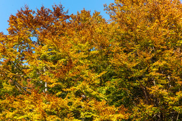 Treetops in the woods during autumn