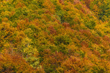 Woods in autumn, natural patterns and background
