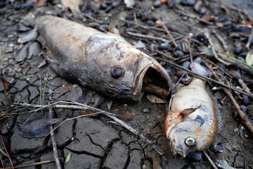 After a sewage leak caused by Hurricane Michael, dead fish lie on the banks of the Apalachicola River in Apalachicola