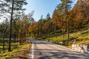 Scenic road across the wood