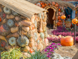 Autumn Harvest Feast With Lots Of Pumpkins