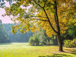 Herbstlicher Baum im Park
