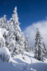 Fototapete - Beautiful winter landscape with forest