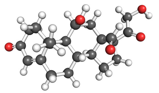 Aldosterone is a steroid hormone secreted by the adrenal cortex in the adrenal gland, important for regulating blood pressure. Ball and stick model, conventional coloring of atoms.