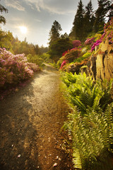 Way in the well-tended garden with color flowers and the sun on background