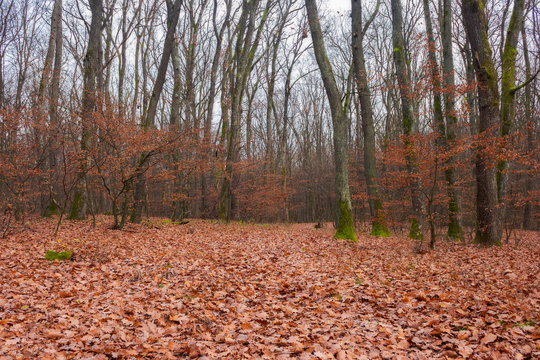 lonely walks in empty naked forest. brown foliage on the ground. sad feelings and thoughts