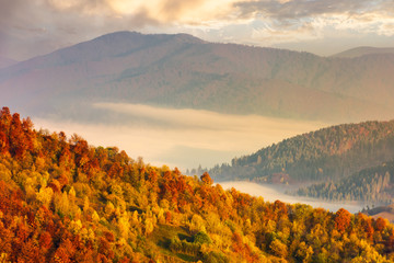 lovely autumn scenery in mountains at sunrise. forest in fall colors. fog in the distant valley.