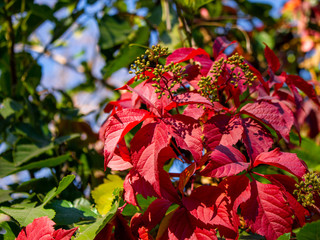 very beautiful colorful autumn leaves,