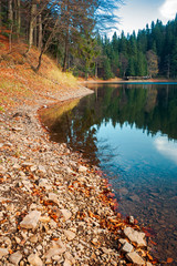 shore of Synevyr lake. fallen autumn foliage on the rocky bank. wooden pier in the distance. beautiful calm evening