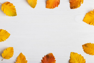 Autumn composition of leaves on a white background. Concept copy space.