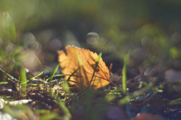 yellow leaf in the grass