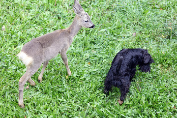 Fawn and dog, best friends