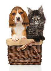 Wall Mural - Kitten and puppy together in wicker basket