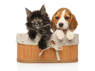 Wall Mural - Kitten and puppy together in basket