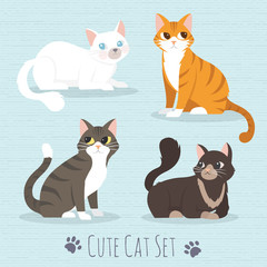 So Cute Cat