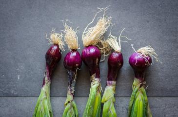 Row of five purple onions
