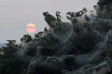 The sun rises as spider webs blanket bushes at the banks of Lake Vistonida