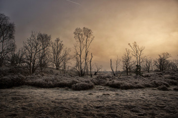Printed kitchen splashbacks Gray traffic Start trees in a misty and frost landscape with the early morning sun trying to burn its way though the fog.