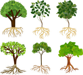 Set of different cartoon deciduous trees with green crown and root system isolated on white background