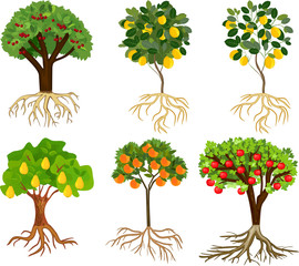 Set of different cartoon fruit trees with ripe fruits and root system isolated on white background