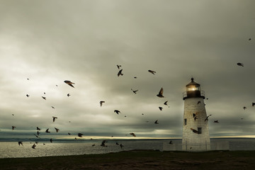 Fantastic picture of the lighthouse on the ocean. A flock of birds and a dramatic sky.