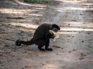 Macaco comendo pão