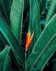 Flower with dark green leaf in tropical jungle nature background