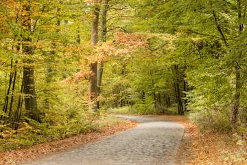 Leśna droga jesienią