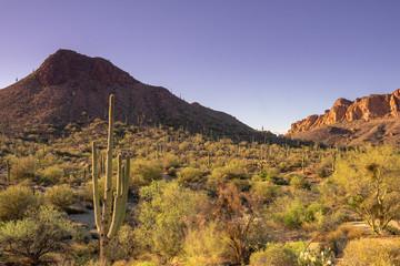 Arizona scenic desert landscape,USA