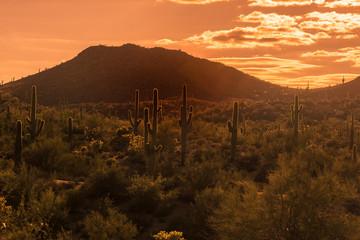 Wall Mural - Sun sets over Arizona desert landscape near Phoenix ,Az,USA