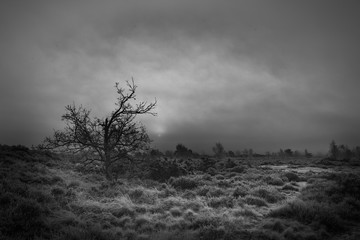 Monochromatic scene with Tree rising from frosty grass, silhouetted by the rising sun.