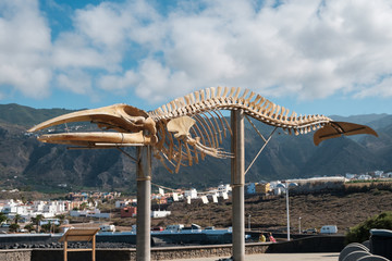 Whale skeleton on Tenerife, Canary Islands -