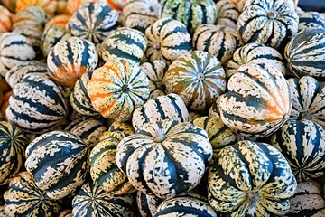 Pumpkin selection  for Halloween
