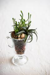 Succulent plants in interior composition