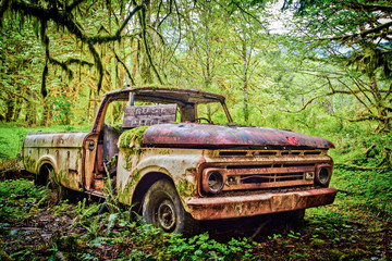 Abandoned Ford pickup truck from 1963 decaying in the middle of a rainforest, Washington, USA