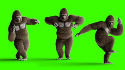 Funny brown gorilla dancing. Super realistic fur and hair. Green screen. 3d rendering.