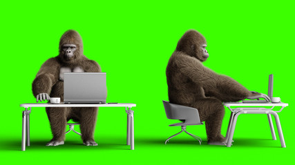 Funny brown gorilla works behind a computer. Super realistic fur and hair. Green screen. 3d rendering.