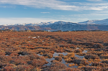 Foto op Canvas Poolcirkel Tundra Wetlands in the High Arctic
