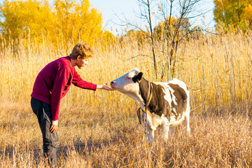young happy guy hugs beautiful cow in the summer field, animal love a smile concept  а