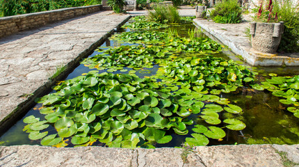 Pond with lilies in the yard