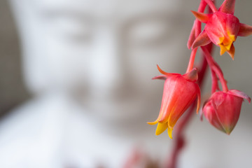 buddha with succulent bloom