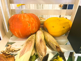 Big orange yellow pumpkin, zucchini and green corn in a wooden white box